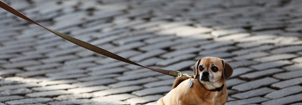 leinenaggression hund