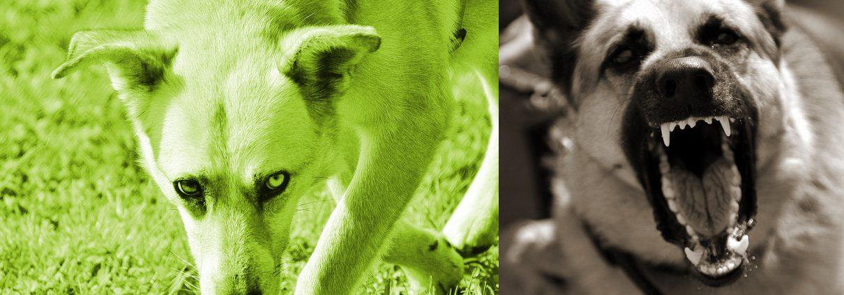 rootdogs image slide aggression