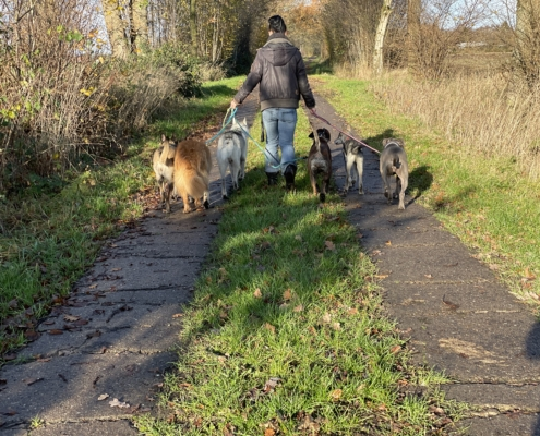 hundebetreuung-kiel-neumuenster